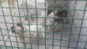 Tragedia di Mascalucia, oggi l'udienza per decidere la sorte dei cani. Intanto la madre ha chiesto il patteggiamento
