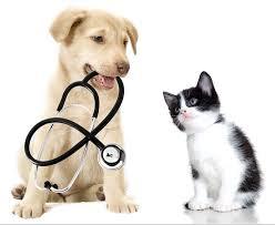 Salute assicurata anche per i cani: da fine febbraio ecco la polizza a misura di quattro zampe
