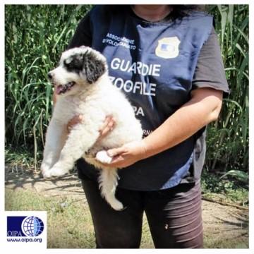 Cinque cani liberati da maltrattamento: a Fiano Romano intervento delle Guardie Zoofile Oipa