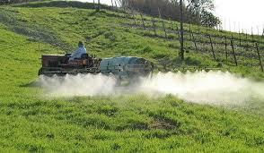 I pesticidi sono tra gli agenti maggiormente cancerogeni per i cani