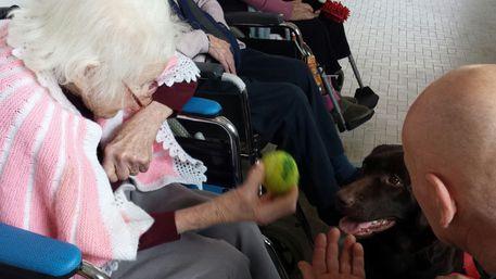Cuccioli tra gli anziani a Loano: così i cani della Pet Therapy VdA onlus prendono a zampate noia ed età