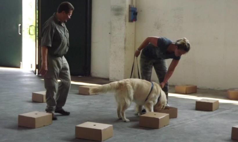 """Si scrive """"sniff"""", si legge """"Scent"""": il gioco di naso che piace ai cani è lo Scent Game"""