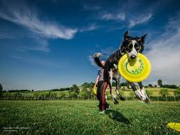 Uno spettacolo di sport: il Disc Dog Csen è firmato Adrian Stoica. Verso una nazionale della disciplina