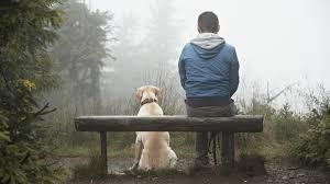Un'emozione per due: la scienza dimostra il 'contagio' emotivo tra uomo e cane