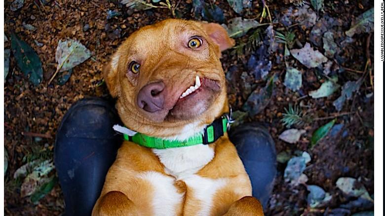 Picasso il cane cubista che nessuno voleva: negli Usa corsa all'adozione per lui e il fratellino