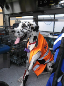 ambulanza-veterinaria-2