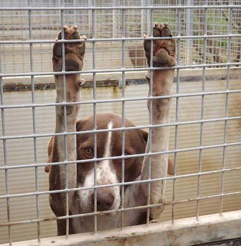 """In Toscana """"più adozioni, meno abbandoni"""": FdI ci prova con una legge"""