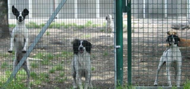 Il canile comunale scuote Palermo: tra polemiche e braccio di ferro, quale futuro per i cani? Il punto del Comune