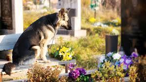 """Pietrasanta apre ai cani al cimitero. Il sindaco Mallegni: """"Lì riposano anche i loro cari"""""""