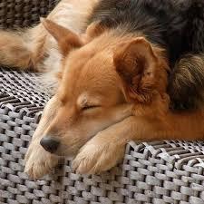 Bimba cade dal divano e finisce sul cane che dorme, lui reagisce