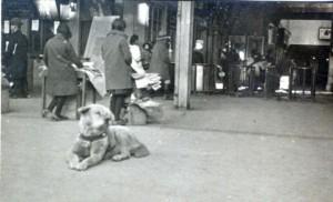 hachiko-stazione