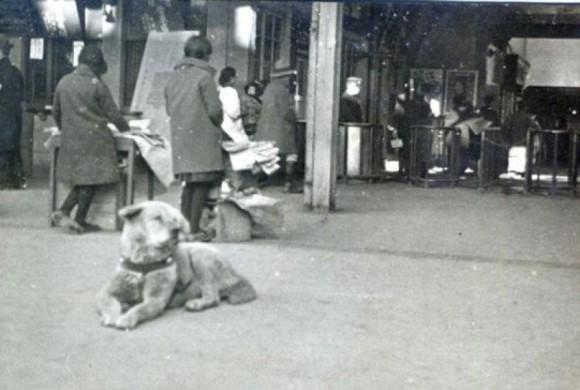 8 marzo non solo festa della donna: in Giappone oggi si ricorda la fedeltà del cane Hachiko