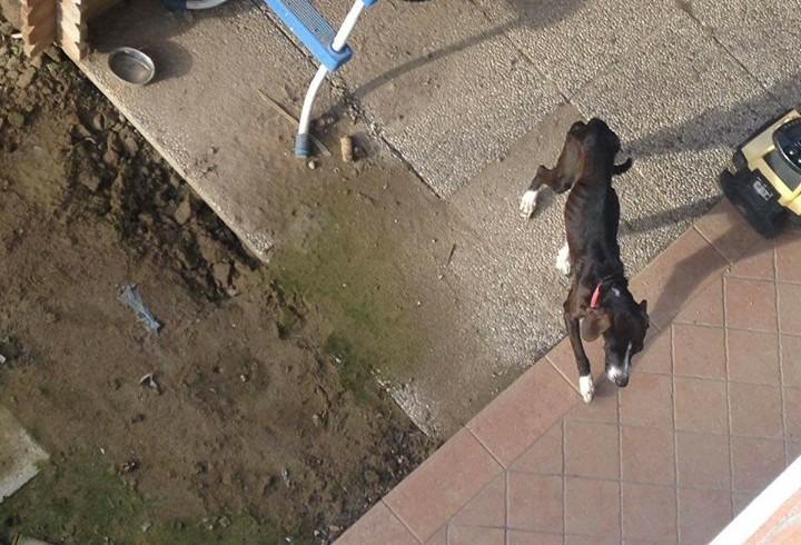 Malnutrito e circondato da escrementi: cane salvato a Jesolo grazie alle segnalazioni dei vicini