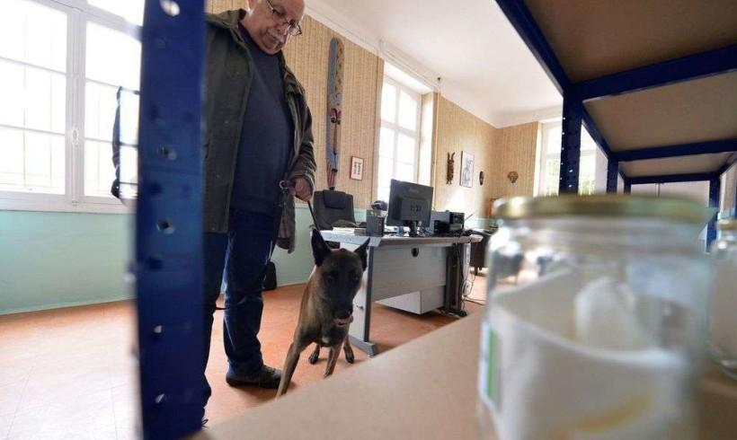 Cani annusa-cancro efficaci al 100% nei primi test francesi