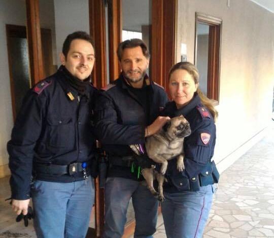 Incendio in appartamento a Livorno, salvati un carlino e la sua umana