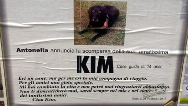 """Un necrologio per il cane guida Kim: """"Mi hai cambiato la vita, non ti dimenticherò mai"""""""
