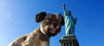 """NYC verso le amministrative, in lizza anche l'animalista Sal Albanese. Enpa: """"Ora stop alle uccisioni nei canili"""""""