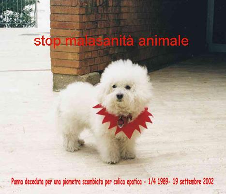 Malasanità animale, la battaglia Arca2000 continua: una legge per la tracciabilità obbligatoria dell'operato veterinario