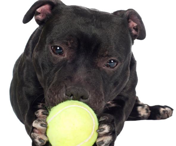 Libero al parco pubblico, cane vede un bimbo con la palla e lo manda all'ospedale