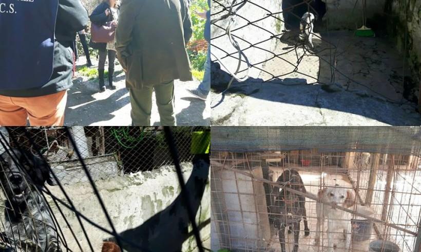 """Canile lager scoperto a Roma, Diaco (M5S): """"Scenario agghiacciante sul suolo pubblico degli orti urbani"""""""