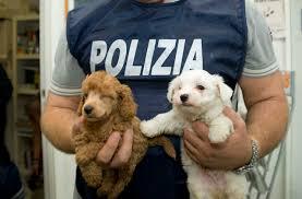 Contro il traffico illegale di cuccioli arriva Bio-Crime: FVG capofila nel patto di ferro Italia-Austria