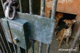 """Trani verso il processo per il Dog's Hostel. Lndc: """"Ma qui è ancora terra di nessuno"""""""