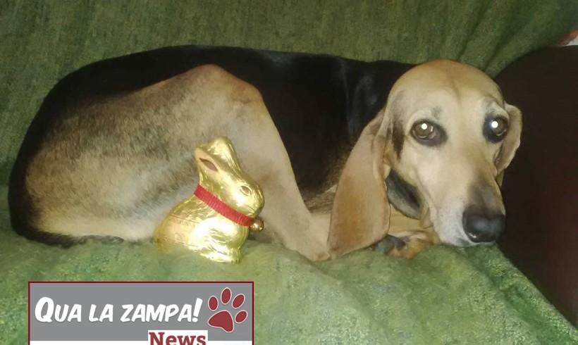Buona Pasqua da qualazampa.news e dalla sua segugia mascotte Erly! Noi torniamo martedì!