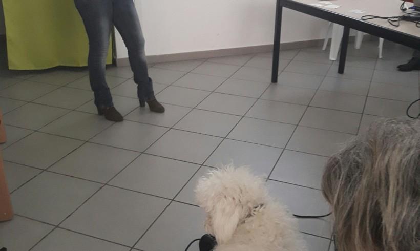 Il cane in famiglia – Sai comuniCANE? I segnali tra cani in videopillola con l'istruttore cinofilo qualificato Sonia Di Palma