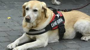 Cani guida via alla campagna di sensibilizzazione for Ciechi in italia