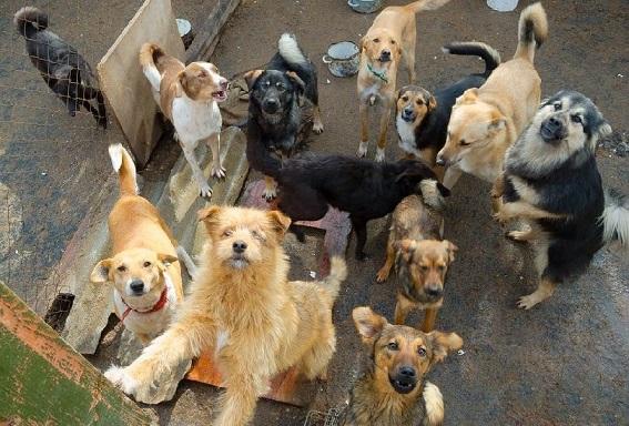 Tutela animale, in Toscana arriva il piano regionale: soccorso, benessere nei canili, pet therapy e anagrafe canina al centro del programma