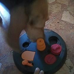 A Las Vegas le start up italiane scommettono sul cane, tra utilità sociale e giochi per quattro zampe