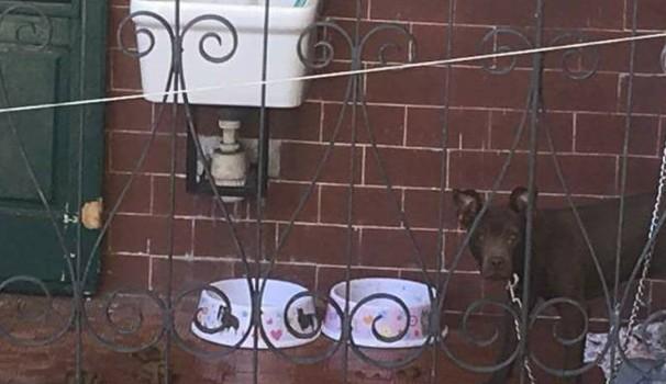 Parte e lascia il cane legato a catena sul terrazzino: cucciolone liberato da Enpa