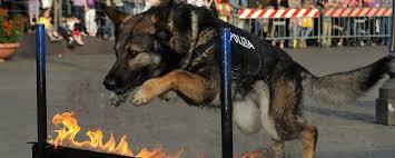 """Per gli animali morti sul lavoro, oggi la giornata-memorial Aidaa """"Io c'ero"""""""