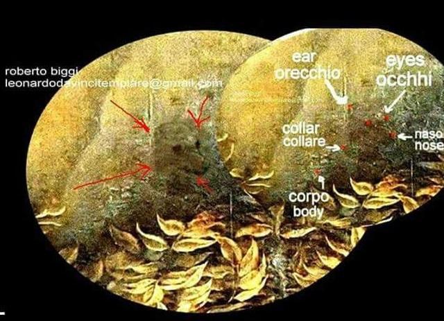 cane-vergine-rocce-dettaglio