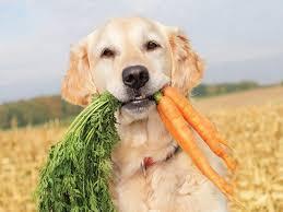 Mangiare come un lupo: per il cane spopola la dieta Barf