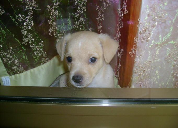 Ciro dei miracoli: il cucciolo salvato a Rimini ha trovato una famiglia
