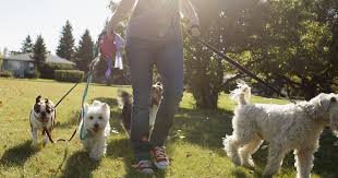 Lessicario cinofilo: dog walker, chi era costui?
