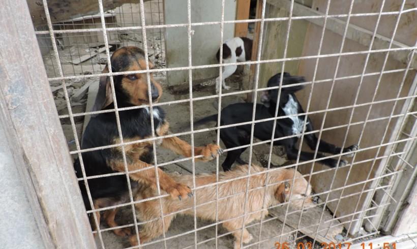 Canile lager per otto cani: nel Trevigiano Oipa li libera dal loro aguzzino
