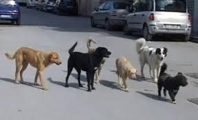 Il randagismo alza la posta: cani senza famiglia stimati a quota 700mila