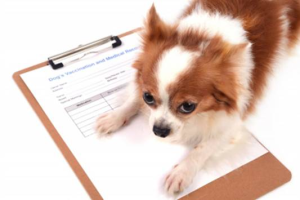 vaccino-salute-veterinario