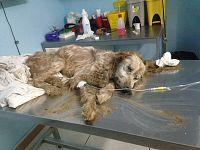 Il cane appena recuperato. Foto: Eleonora Marica (Facebook)