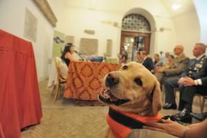 La presentazione dell'iniziativa in Campidoglio. Foto: Abbaiare a Roma / Facebook