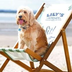 L'happy hour da cani: a Ravenna c'è, è il Doggy Beach Bar