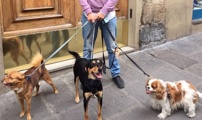 Microchip, in Toscana giro di vite anti-abbandono
