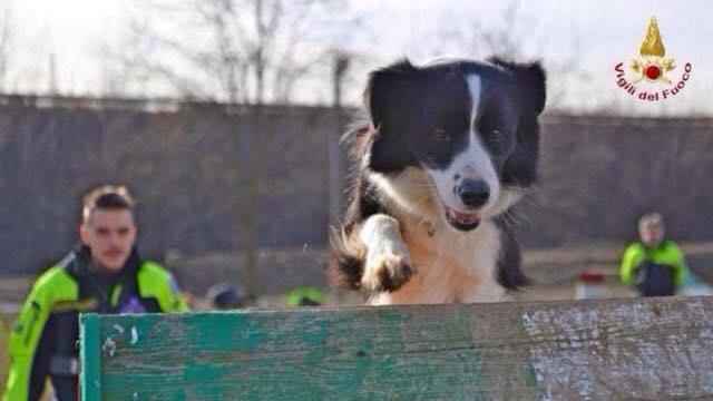 """Terry come """"terremoto"""": da cucciolo salvato dalle macerie di Norcia a cane pompiere"""