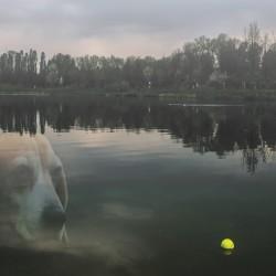 Un cane Angelo, tanti #Angeli. Per loro arriva una docu-fiction destinata alle scuole