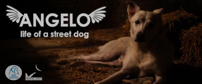Il cane Angelo diventa un film. Il ricavato in favore degli animali maltrattati