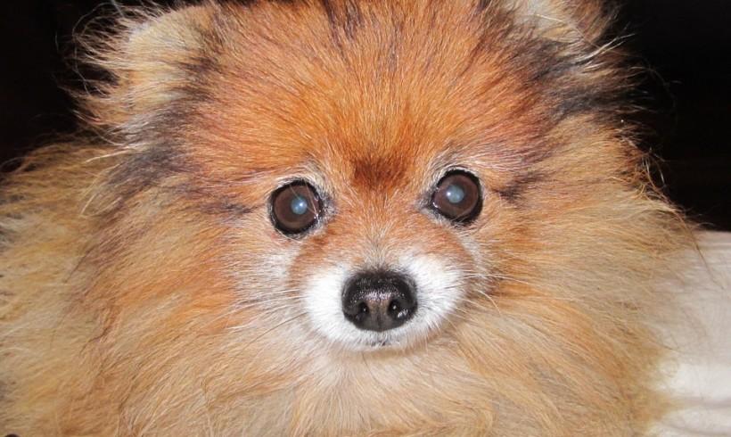 Occhio di Falco, ecco il cane che ha salvato un contadino colto da malore