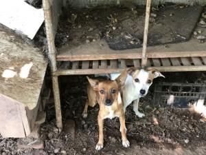 Due delle cagnoline sequestrate. Foto: Oipa