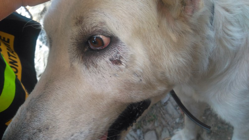 Picchiati e malati, Oipa salva sei cani a Genova